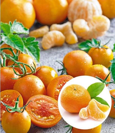 """Tomate Tutti Frutti® """"Mandarine"""",1 Pflanze"""