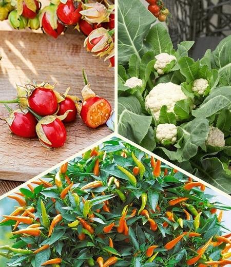 Topf-Gemüse-Kollektion, 6 Pflanzen