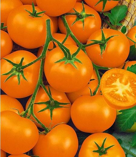 "Veredelte Carotin-Tomate ""Bolzano"" F1 2 Pflanzen"