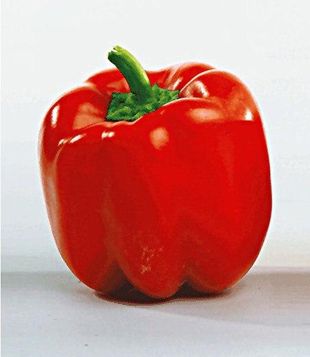 "Veredelte Paprika ""Jericho"" F1,2 Pflanzen Paprikapflanzen"