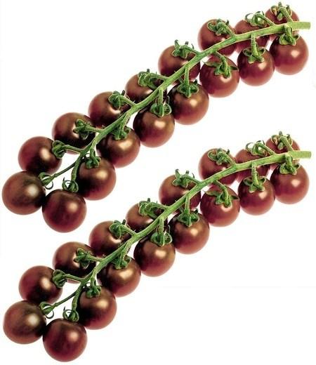 Veredelte Zucker-Tomate Solena® Choco F1,2 Pflanzen
