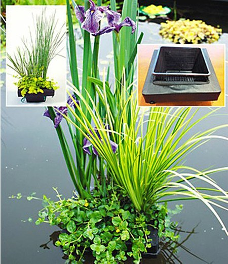 Wasserpflanzen-Insel mit Schwimmring,1 Komplett-Set mit Wasserpflanzen