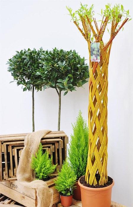 Weide 4-fach geflochten (hell) Säule XL - Salix alba