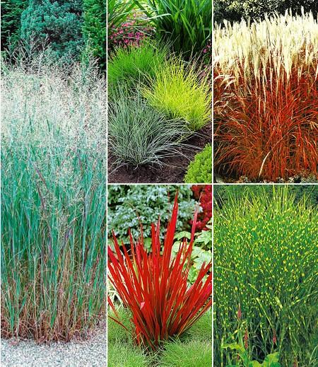 Winterhartes Gräserbeet,9 Pflanzen