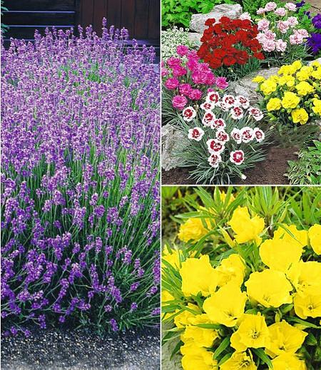 Winterhartes Staudenbeet Bienenweide,11 Pflanzen