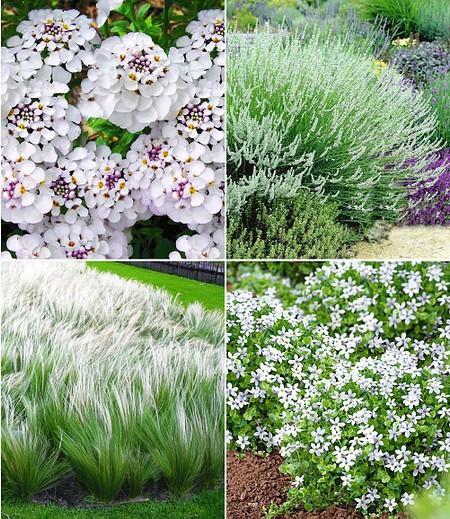Winterhartes Staudenbeet Eleganz in Weiß,12 Pflanzen