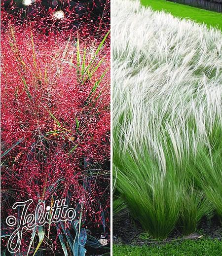 Ziergras-Kollektion,6 Pflanzen
