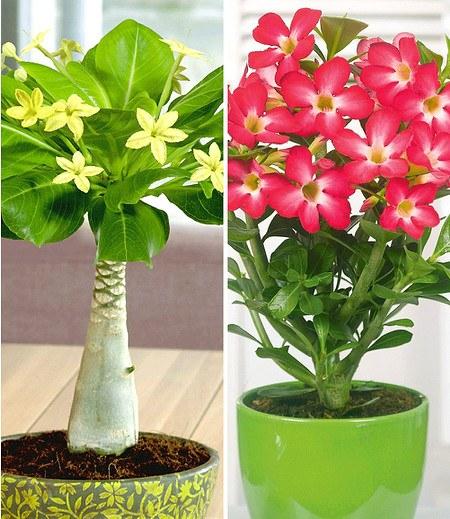 Zimmerpflanzen-Kollektion,2 Pflanzen