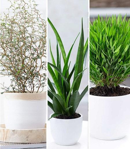 """Zimmerpflanzen-Mix""""Fensterbank"""",3 Pflanzen"""