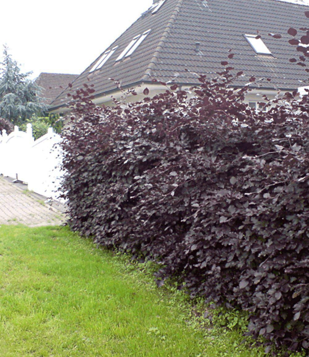 Heckenbogen gestalten Mein schöner Garten
