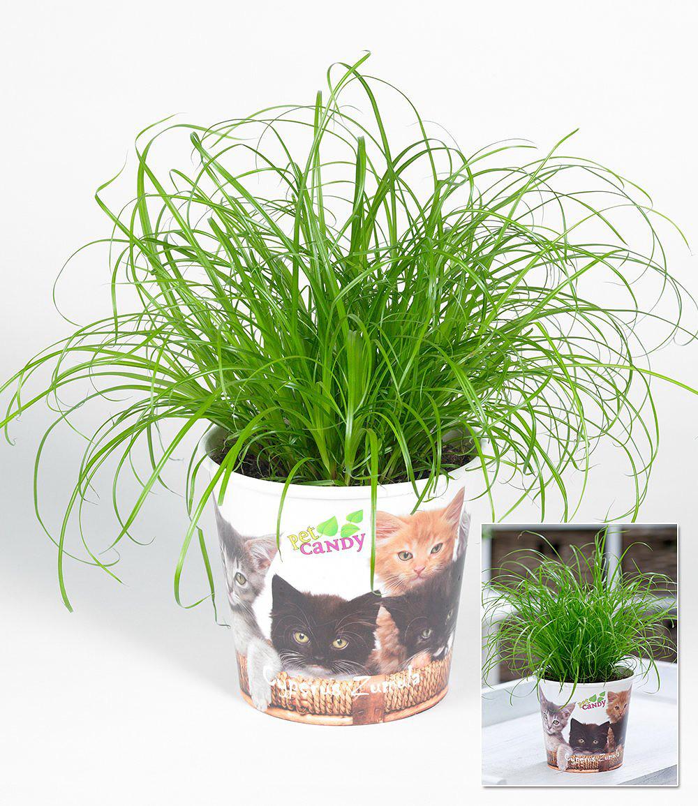 Giftige und ungiftige Pflanzen für Katzen - Mein schöner Garten