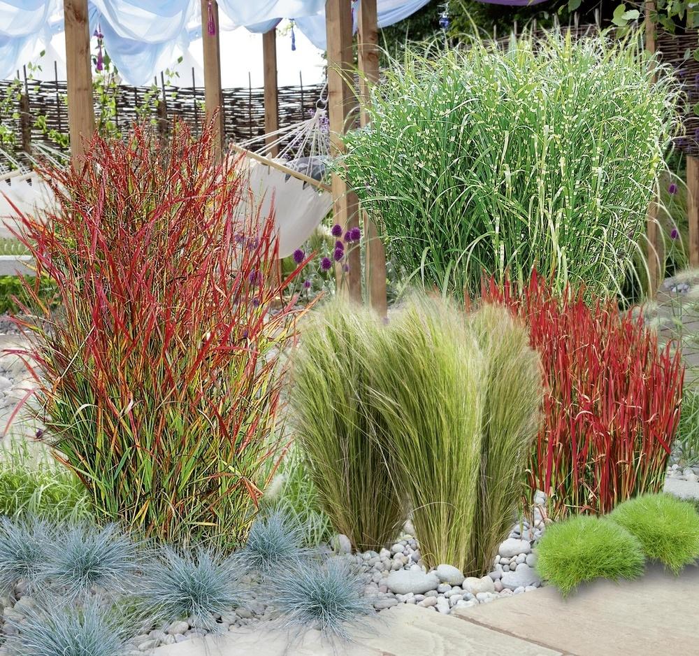 Mein Schöner Garten Gräserbeet Sonne 16 Pflanzen Günstig Online