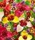 """Blumenzwiebel-Mix """"Blüten-Feuerwerk"""",20 Stück (1)"""