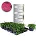 Bodendecker-Thymian 25 Stk.,25 Pflanzen (1)