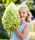 """Freiland-Hortensie """"Herkules®"""",1 Pflanze (1)"""