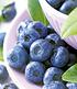 """Heidelbeere """"Blauprotz"""",1 Pflanze (1)"""