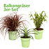 Mein schöner Garten Balkongräser 3er-Set (1)