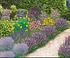 """Mein schöner Garten Bienenfreundliches Gartenbeet """"Nektar-Oase"""", 21 Pflanzen (1)"""