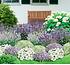 Mein schöner Garten Bienenfreundliches Staudenbeet, 19 Pflanzen (1)