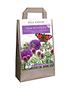Mein schöner Garten Blumenwiebel-Mix 'Happy Butterfly' (1)