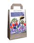 Mein schöner Garten Blumenzwiebel-Mix 'Happy Bee' (1)