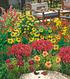 """Mein schöner Garten Gartenbeet """"Insektenweide"""", 31 Knollen + 1 Pflanze (1)"""