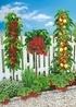 Mein schöner Garten Naschbeet pflanzfertig, 10 Pflanzen (1)