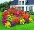 Mein schöner Garten Staudenbeet Sommerliebe, 14 Pflanzen (1)