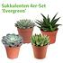 Mein schöner Garten Sukkulenten 4er-Set 'Evergreen' (1)