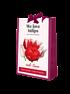Mein schöner Garten Tulpen Beet 'Red Love' (1)