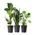 Sense of Home Zimmerpflanzen-SetUrban Jungle ohne Übertöpfe (1)