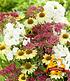 """Stauden-Mix """"Bienenfreund"""",3 Pflanzen (1)"""