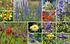 """Staudenbeet """"Farb-Dreiklang im Sonnenbett"""" zum Nachpflanzen (1)"""