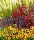 "Staudenbeet ""Olympic Colours"",6 Pflanzen (1)"