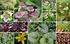 """Staudenbeet """"Schmales Beet im Halbschatten"""" zum Nachpflanzen (1)"""