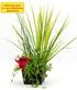 "Teichpflanzen-Korb ""Mix 3 Pflanzen"",1 Set (1)"