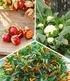 Topf-Gemüse-Kollektion, 6 Pflanzen (1)