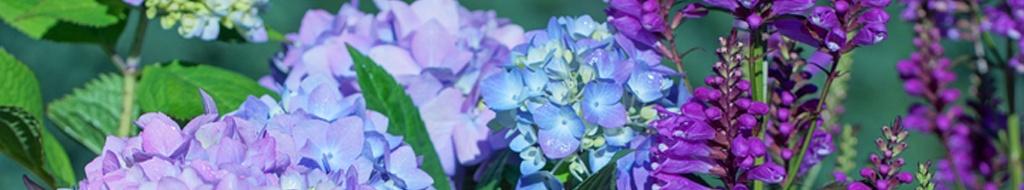 Farbtupfer in Blau und Violett