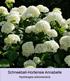 Mein schöner Garten Bienenfreundliches Staudenbeet, 19 Pflanzen (9)