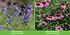 """Mein schöner Garten Staudenbeet """"Blooms for Months"""", 29 Pflanzen (9)"""