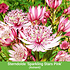 """Mein schöner Garten Staudenbeet """"Sunshine"""", 18 Pflanzen (9)"""