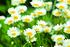 Staudenbeet Ausgewogener Andrang, 12 Pflanzen (9)