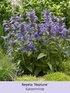 Mein schöner Garten Bienenfreundliches Staudenbeet, 19 Pflanzen (6)