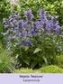 Mein schöner Garten Bienenfreundliches Staudenbeet, 21 Pflanzen (6)