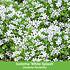 """Mein schöner Garten Bodendecker-Set """"Eyecatcher"""", 19 Pflanzen (6)"""