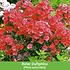 """Mein schöner Garten Gartenbeet """"Insektenweide"""", 35 Pflanzen (6)"""