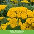 Mein schöner Garten Schneckensicheres Staudenbeet, 20 Pflanzen (6)