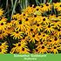 """Mein schöner Garten Staudenbeet """"Blooms for Months"""", 29 Pflanzen (6)"""