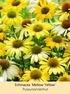 Mein schöner Garten Staudenbeet Sommerliebe, 14 Pflanzen (6)