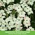 """Mein schöner Garten Vogelschutz-Hecke """"Bird-Lover"""", 14 Pflanzen (6)"""